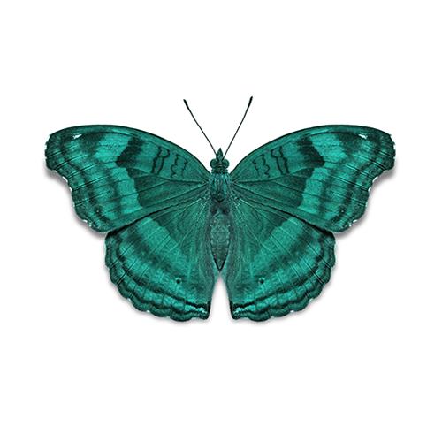 butterflyu